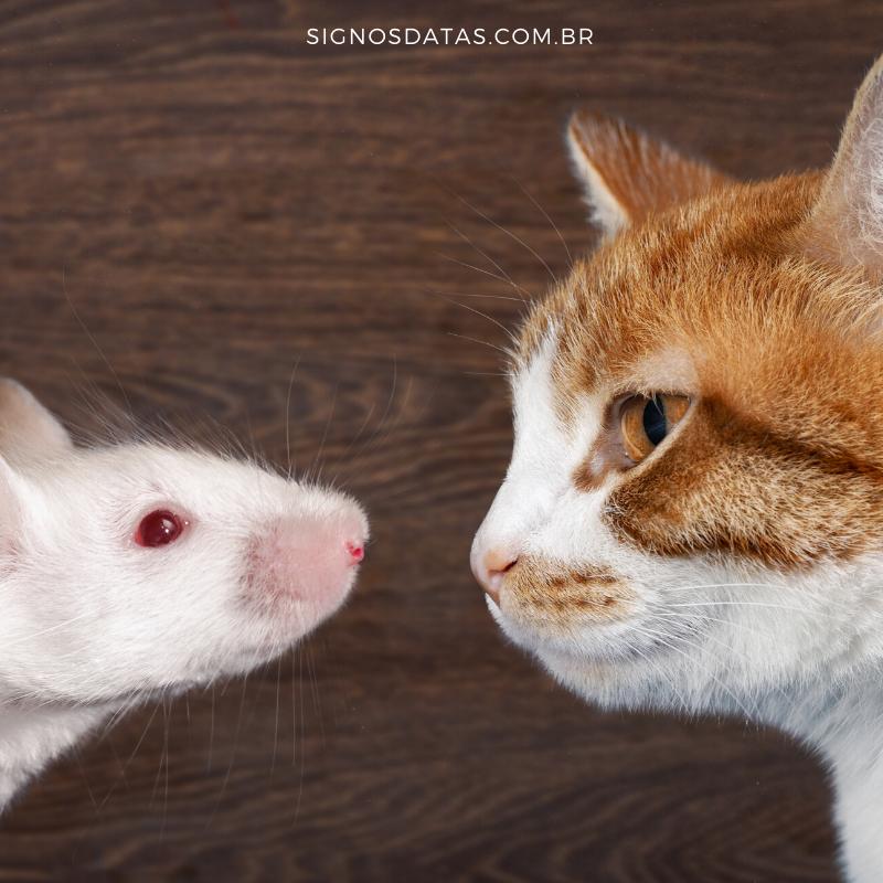 gato e rato (1)