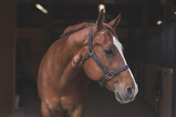 Significado de Sonhar Com Cavalo: O Que Quer Dizer?