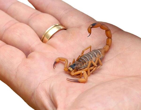O que significa sonhar com escorpião? Veja aqui!