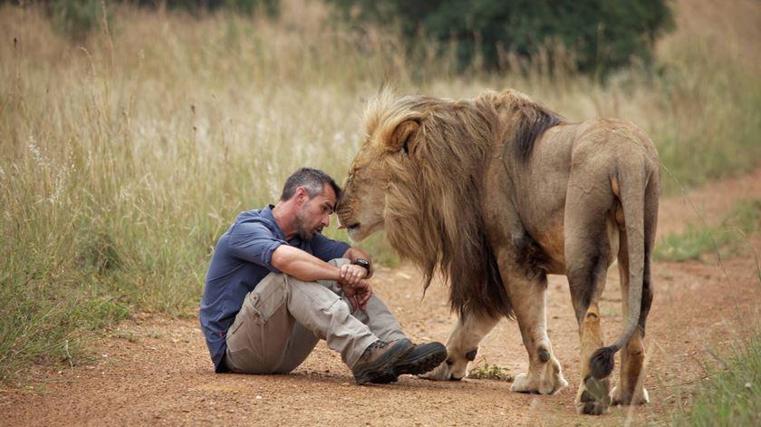 sonhar com leão manso