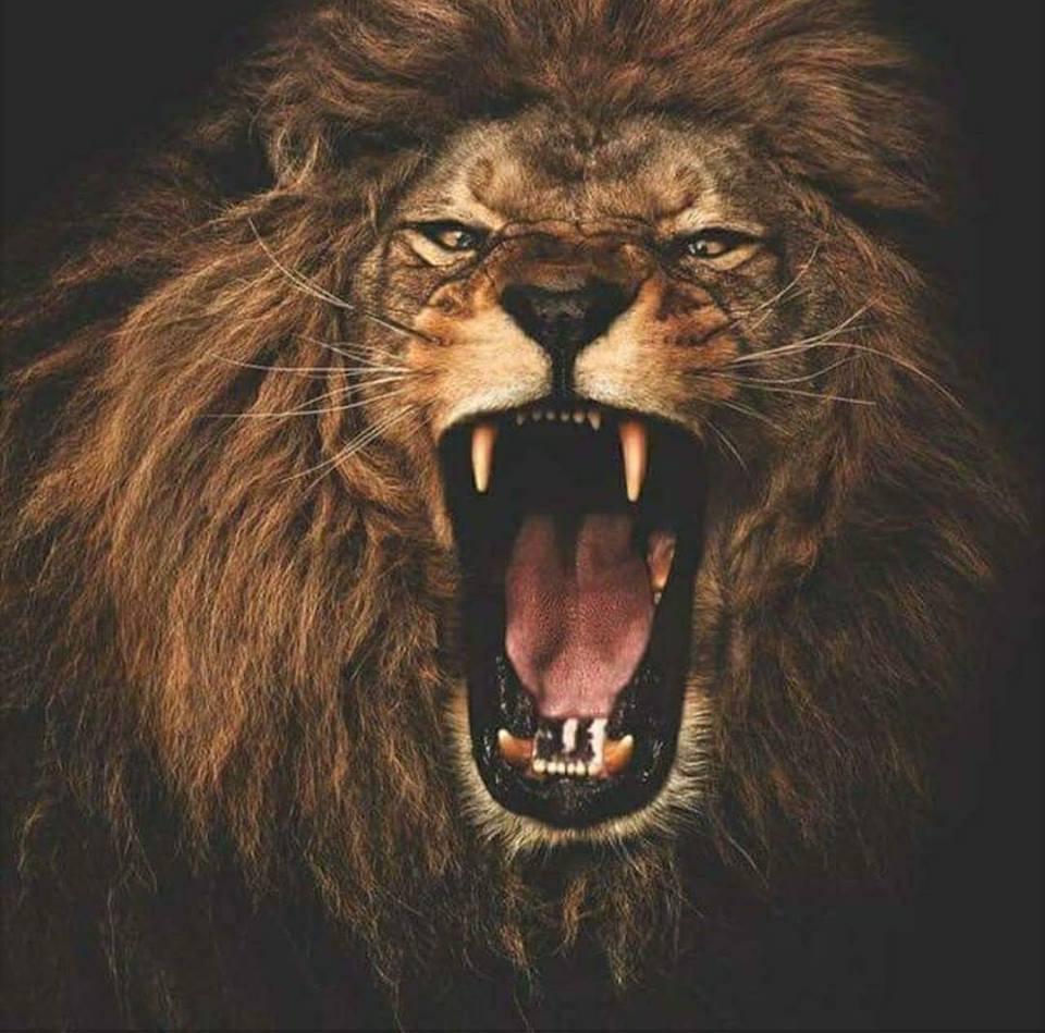 sonhar com rugido de leão