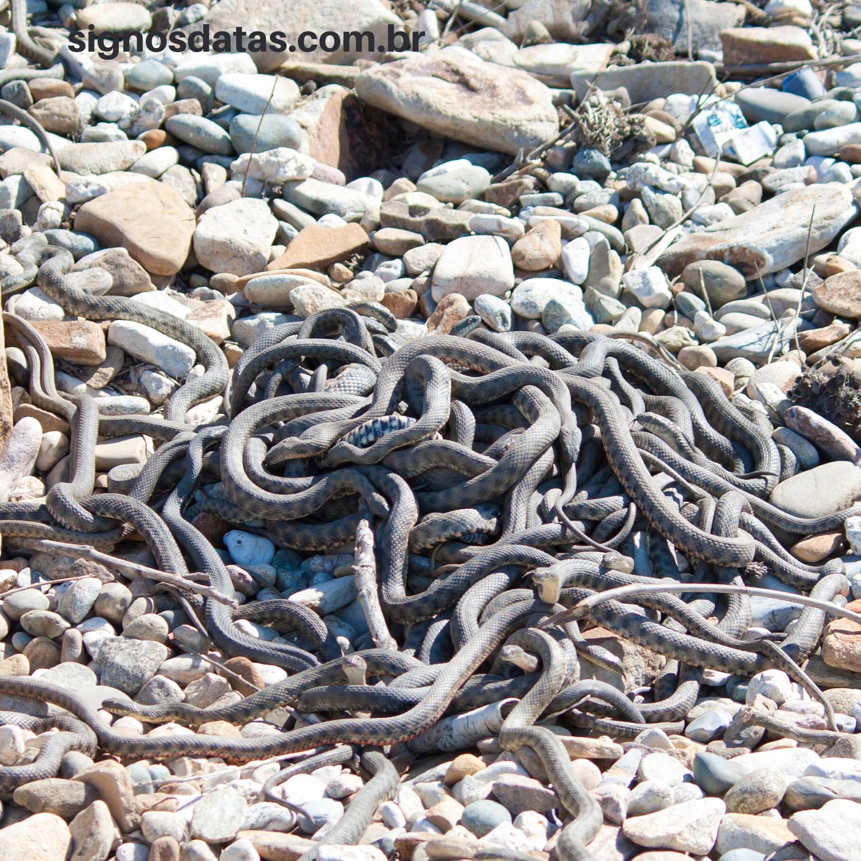 muitas cobras