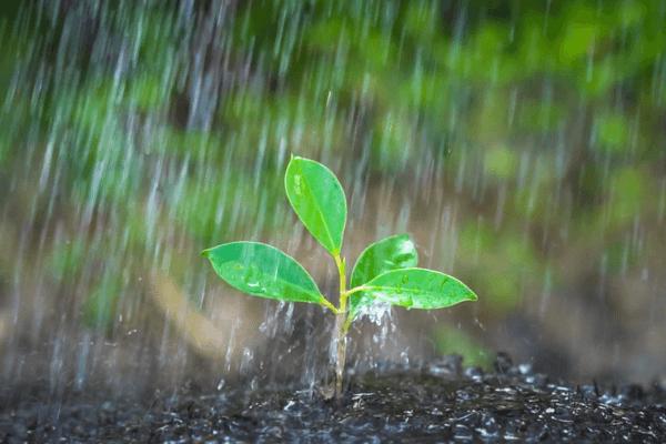 Sonhar com chuva: o que isso quer dizer? Veja aqui!