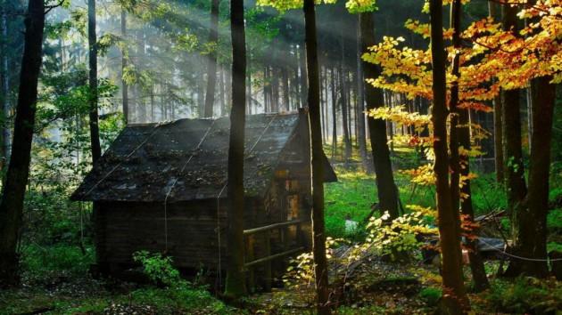 casa em floresta